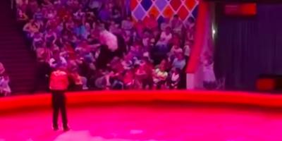 Очевидцы засняли нападение страуса на посетителей цирка в Казани