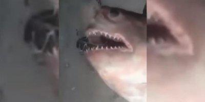 Двухметровая акула испортила россиянам рыбалку на Енисее