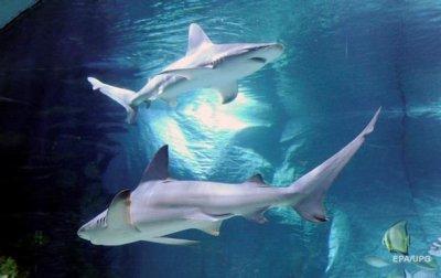 Китаянка упала к голодным акулам и выжила - (видео)