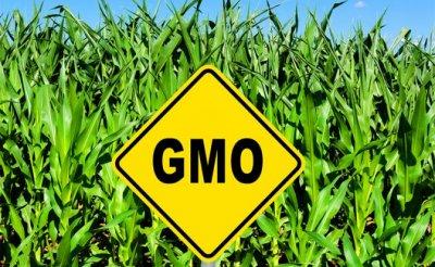 Подводные камни вреда ГМО - «Здоровье»