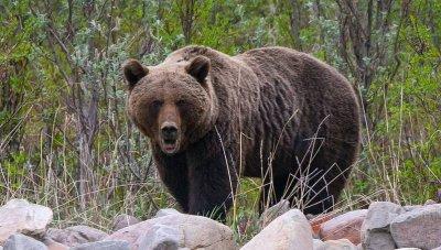В Харьковской области медведь напал на женщину - «Новороссия»