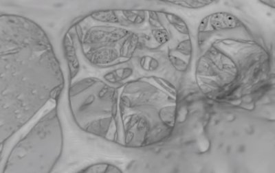 Ученые нашли в костях человека новый тип кровеносных сосудов - (видео)