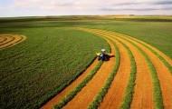 Дорожную карту по противодействию коррупции разрабатывают в сельском хозяйстве - «Экономика»