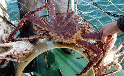Краба заберут у русских рыбаков, чтобы утонуть в санкциях - «Экономика»