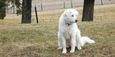 МВД сократило список опасных пород собак
