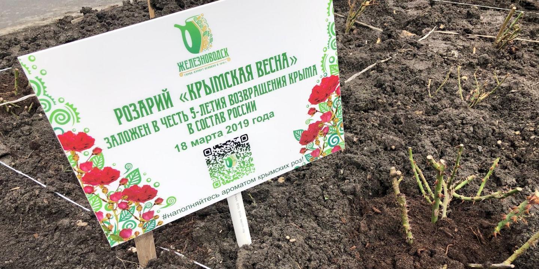 В Железноводске высадили крымские розы
