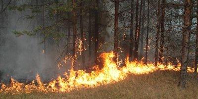 12-летняя школьница не дождалась пожарных и 4 часа сама тушила огонь