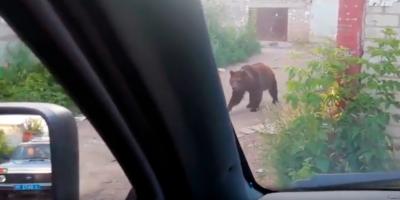 Под Саратовом сбежавшая цирковая медведица напала на людей