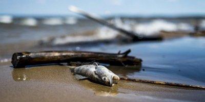 Ульяновская журналистка попыталась взять интервью у мертвой рыбы
