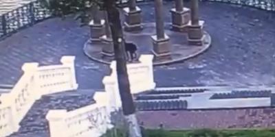 Мэр уральского города вычислил хозяев гадящей в парке собаки через соцсети