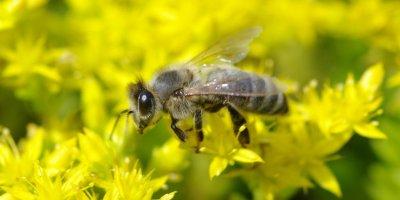 Россельхознадзор обвинил Минэкономразвития в массовой гибели пчел