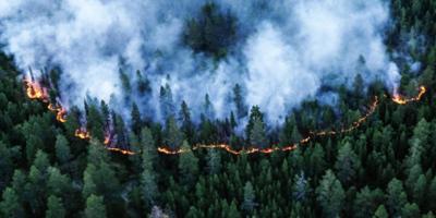 Шнуров написал стихи о лесных пожарах в Сибири