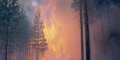 В Иркутской области и Красноярском крае горит свыше 500 тысяч гектаров леса