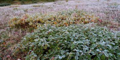 Гидрометцентр спрогнозировал аномально холодный август