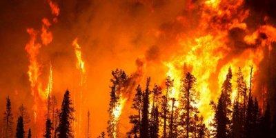 Сибирские пожары сняли из космоса