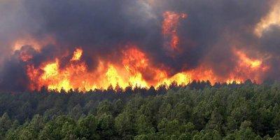 Власти оценили ущерб от лесных пожаров в России