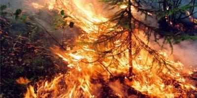 Впервые за несколько недель в России начала сокращаться площадь лесных пожаров