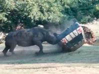 В Германии разъяренный носорог напал на машину сотрудницы сафари-парка (ВИДЕО) - «Автоновости»