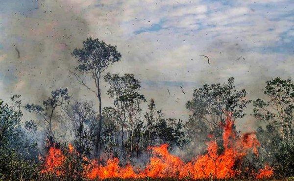 Не все лесные пожары одинаково ужасны - «Мир»