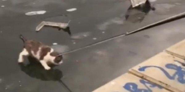 Операцию по спасению примерзшего ко льду кота сняли на видео