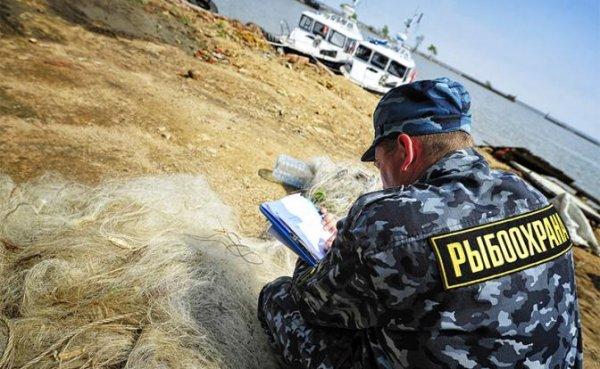 Рыбку не съесть: Пограничники берут браконьеров из КНДР на мушку - «Происшествия»